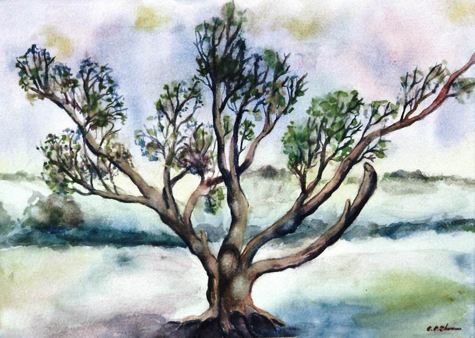 Sussex Oak : watercolour