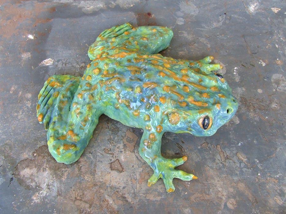 Goliath Frog West Africa Cameroon + Equatorial Guinea